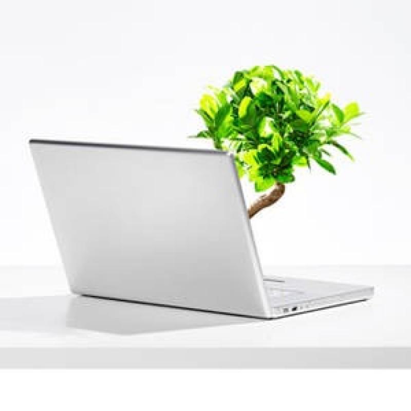 Il Wi-Fi forse non è il killer degli alberi, che confusione