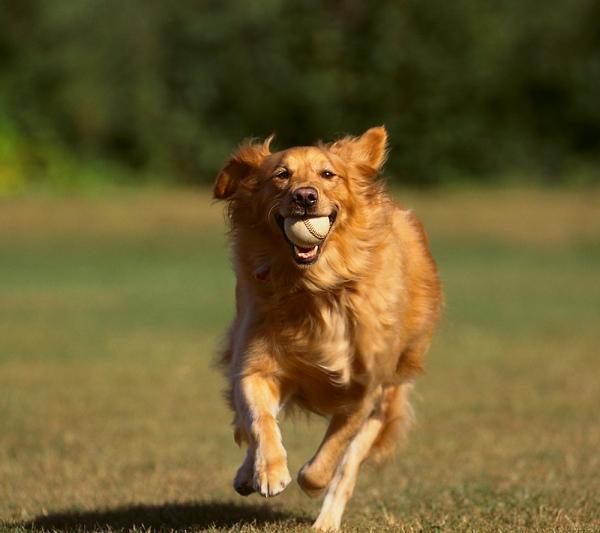 New York: gioca a palla con il tuo cane formato digital!